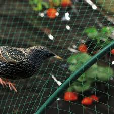 European Starling and Bird Netting